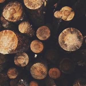 Cut logs of wood | Sustainability 101 – What, Why & How to Get Started