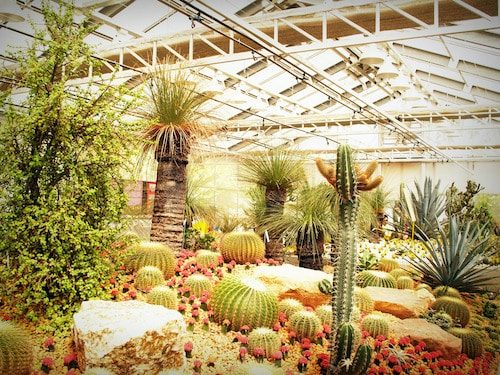 Xeriscaping plants Conserve Water Outdoors