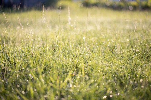 Long grass retains water is way to Conserve Water Outdoors