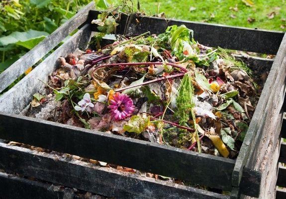 Composting bin with food scraps