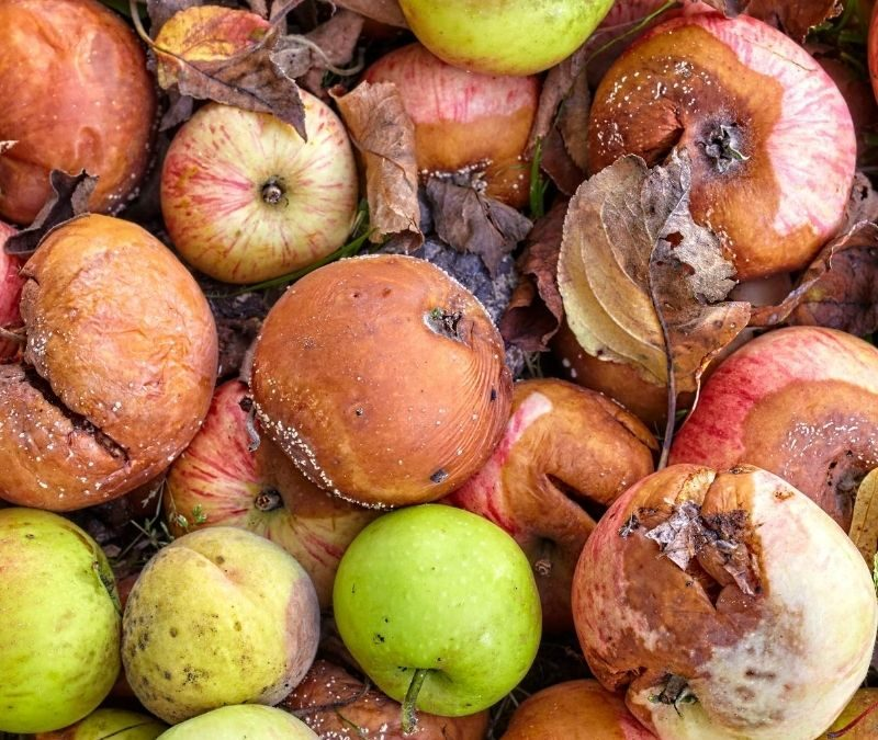 Rotting produce food waste-banner